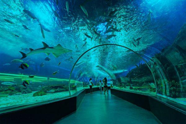 Манила Ocean Park (океанариум)