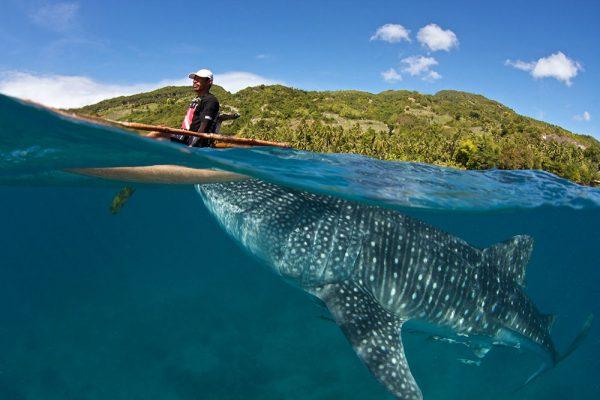 Плавание с Китовыми акулами
