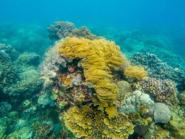 Подводный мир Моалбоала